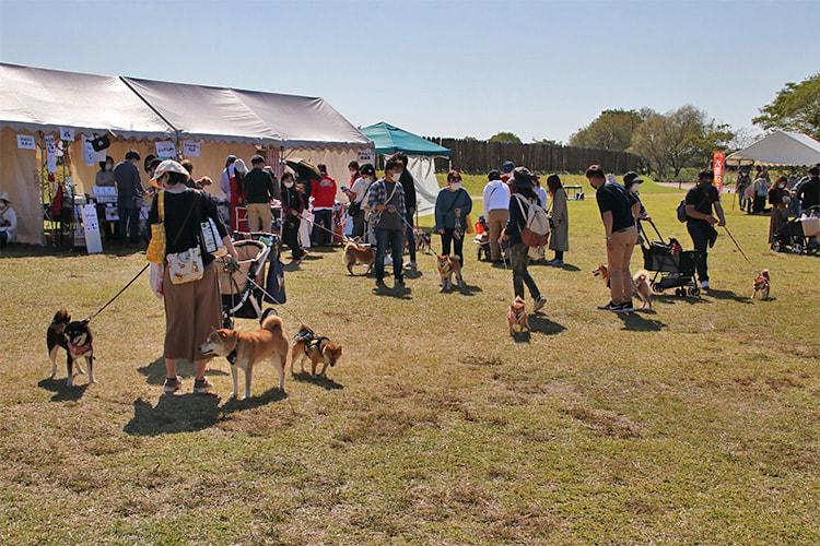 芝生広場にたくさんの犬たちが大集合