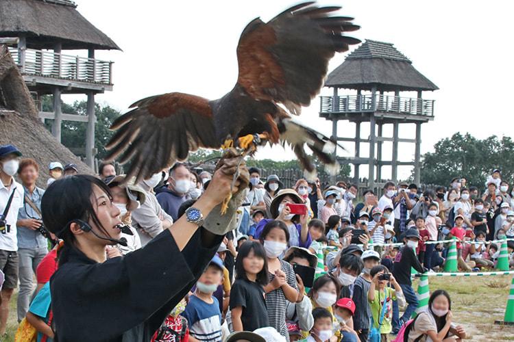 物見櫓を背景に鷹匠の腕に鷹が着陸する様子