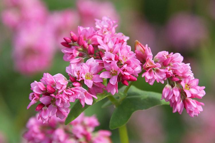 8分以上が開花している花の写真